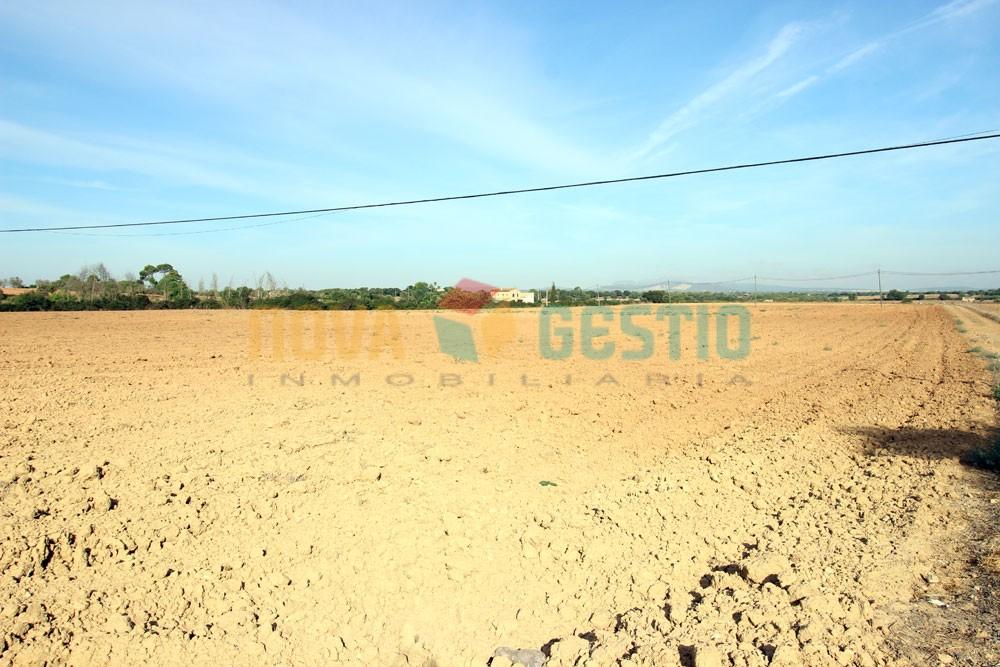 Terreno edificable en venta en Felanitx : : TE402FE-VES
