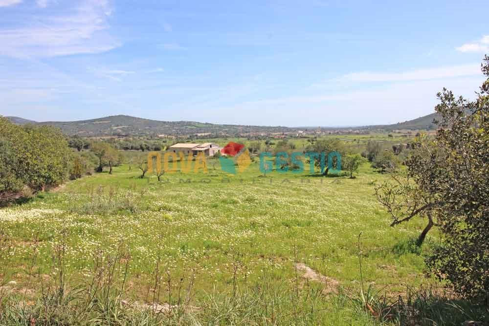 Terreno edificable en venta en Son Carrió : : TE533SCA-VES