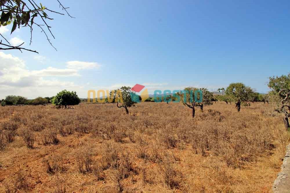 Terreno rústico en venta Porto Cristo : :  TE552PC-VES