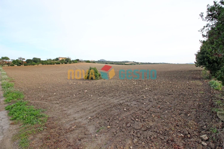 Terreno rústico edificable en venta en Manacor : : TE630MA-VES