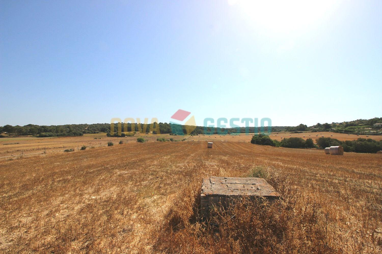 Terreno edificable en venta cerca de Manacor : : TE745MA-VES