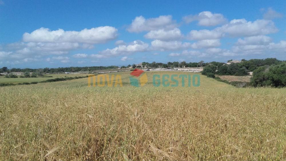 Terreno en venta en Felanitx : : TE381FE-VES