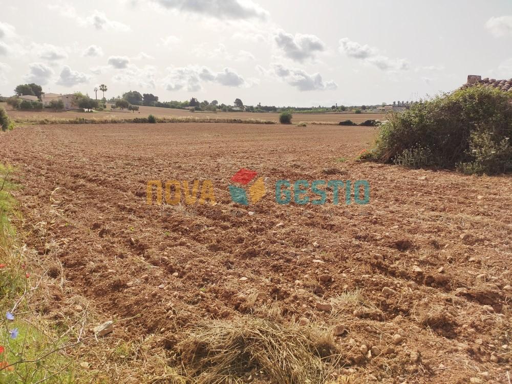 Bauland zum Kauf nahe Manacor : : TE850MA-VDE