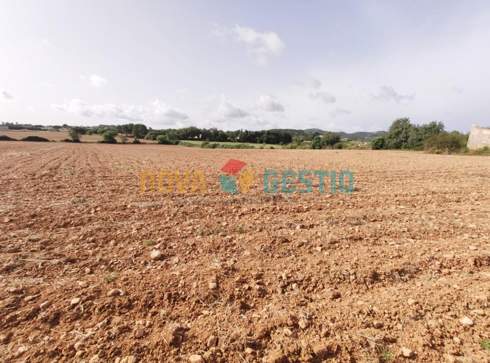 Terreno edificable en venta en Manacor : : TE850MA-VES